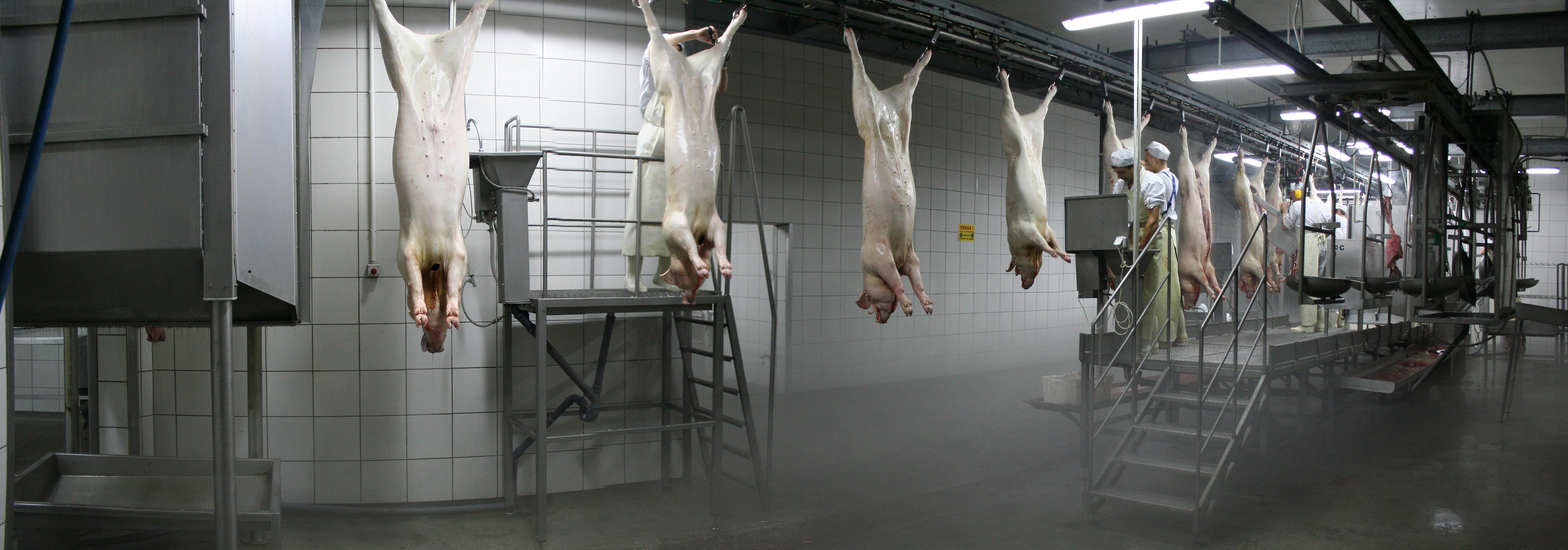 Бойня свиней своими руками